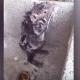Самая чистоплотная крыса на свете: принимает душ, словно человек