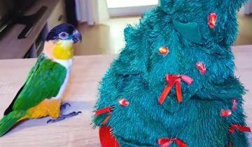 Битва попугая с рождественской елкой: кто кого?!