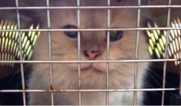 В 17 лет кошечка после смерти хозяина попала в приют