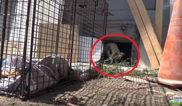 Собака, брошенная хозяевами, полгода выживала, питаясь объедками