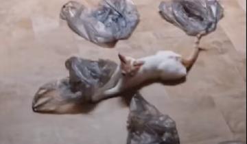 Кот, который открыл для себя пакеты: «Так вот оно — счастье!»
