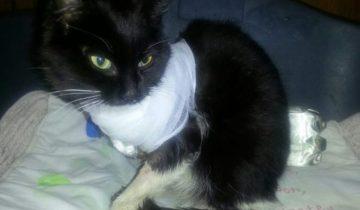Кошечка едва не погибла: из-за невнимательности и равнодушия