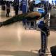 Женщина пыталась взять в самолет павлина для… эмоциональной поддержки