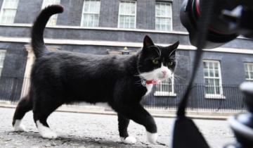 В британском МИДе запретили подкармливать штатного кота