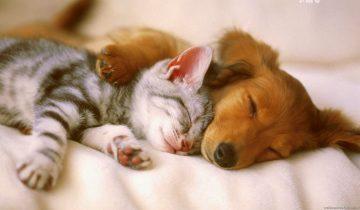 Мамочки всегда найдут общий язык: котята и щенки растут рядом