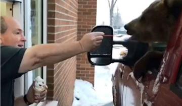 В Канаде в кафе на машине заехала… медведица