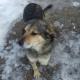 Пес на трех лапах сбежал из клиники, чтобы вернуться домой