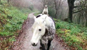 Кот, который вырос в конюшне, любит ездить верхом