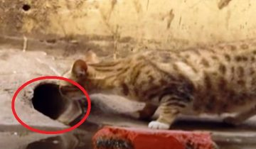 Мама-кошка замерла у трубы: где-то там застряли ее котята