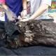 Собака-поводырь помогала слепым. «Благодарностью» стало избиение