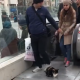Самый ленивый кот на свете собрал за сутки 3 млн. просмотров