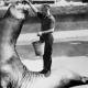 10 гигантских животных, которые существуют на планете