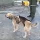 Собака потеряла щенков и стала опекать… обезьянку