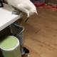 Кот, который играет с котенком игрушкой, поразил пользователей