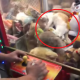 В Дубае в игровом автомате можно было выиграть… живого кота
