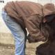 Мужчина утешил грустного медведя: ролик собрал 2 млн. просмотров