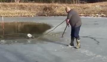 Пастор пополз по ледяной корке на пруду, чтобы спасти собаку