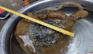 5 странных существ, которые были обнаружены в Китае