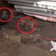 Собака родила на территории предприятия. Но охранник не хотел пускать к щенкам