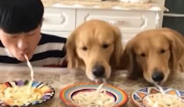 Мужчина затеял смешной эксперимент: еда наперегонки с собаками