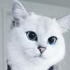 У кота неземной красоты больше миллиона подписчиков в Инстаграм