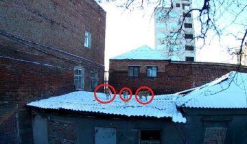 Полугодовалые щенки всю жизнь провели на крыше