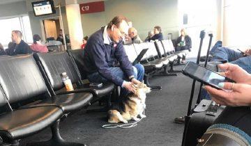 Собака увидела грустного мужчину и подошла к нему