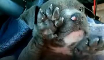 Полицейские спасли маленького, дрожащего и плачущего щенка