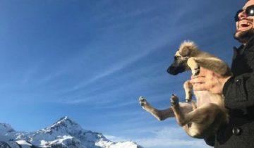 Данила Козловский мечтал о лабрадоре. Но счастье его ждало в Грузии в горах