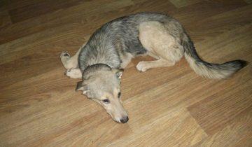 Попав в настоящий ад, собака мечтала вернуться в приют, где ей было лучше