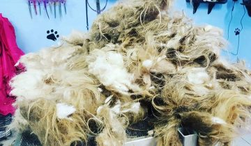 Девушка-грумер среди ночи открыла салон, чтобы постричь бездомного пса