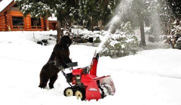 Без собаки, как без рук: ньюфаундленд помогает во всем по дому