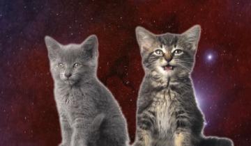 Космические котики собрали 19 млн. просмотров