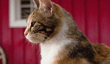 Мама-кошка любила своих котят. Но любви в сердце было слишком много