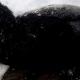 В Уфе нашли пса, которого сбила машина, и он вмерз в лед