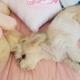 Девушка уехала в колледж, а ее собачка потеряла смысл жизни