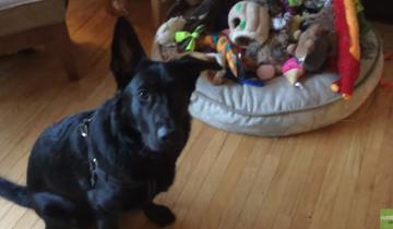 Хозяйка попросила собаку принести любимую игрушку