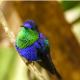 Почему в природе редко встречается синий цвет