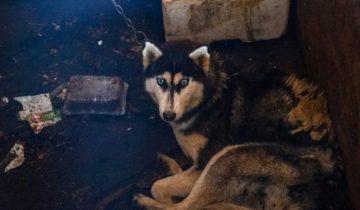 В Твери обнаружили питомник со 160 голодными собаками