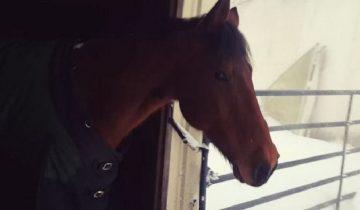 Фермер долго не выпускал лошадей из-за сильного снегопада