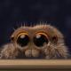 Любите ли вы пауков? После встречи с Лукасом не сможете не любоваться ими