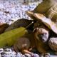 Брошенные щенки обзавелись неожиданной подругой