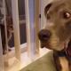 Огромный пес с первого взгляда понял: от крохотного котенка жди беды