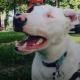 Женщина взяла глухого и слепого пса: «Посмотрите, он же прекрасен!»