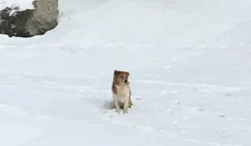 5 дней собака провела на морозе в ожидании тех, кто ее жестоко предал
