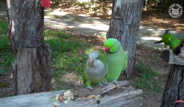 Кто может похвастаться лучшими вокальными данными, чем птицы