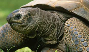 Черепаха-спринтер: такое не каждый день увидишь