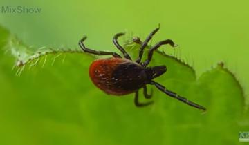 Пятерка опаснейших насекомых на планете