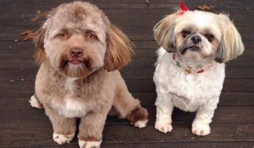 Собака с «человеческим лицом» шокировала Интернет