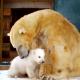Впервые за 25 лет в Британии в зоопарке родился белый медвежонок
